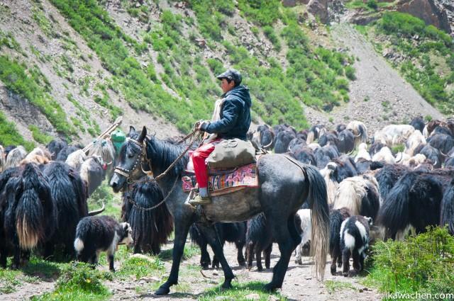 семья тибетских кочевников меняет место стоянки