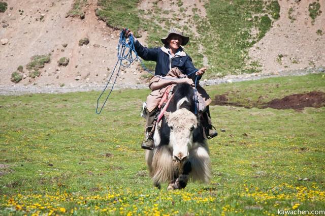 кочевник едет верхом на яке